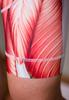 Muscle Cycling Bib short