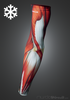 Muscle Armwarmers (Thermal)