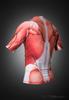 Muscle Rashguard Short