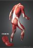 Muscle Skinsuit long with cycling pad