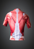 Muscle cycling jersey