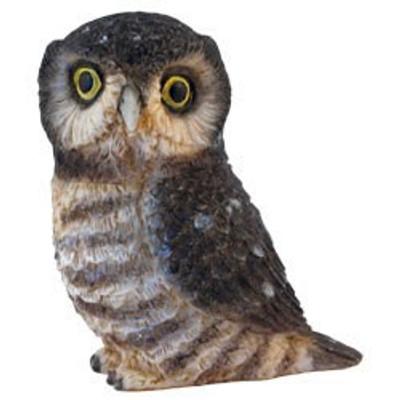 PB A - Hawk Owl #PBZOW11