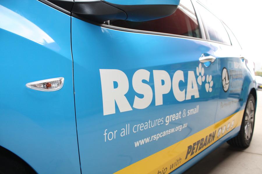 RSPCA i30 Wagon Full Wrap