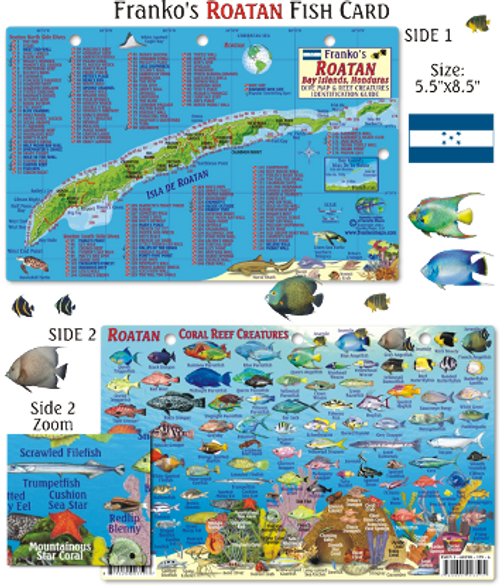 Waterproof Fish ID Card - Roatan