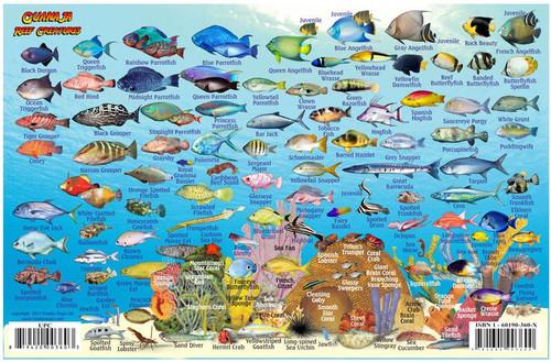Waterproof Fish ID Card - Guanaja