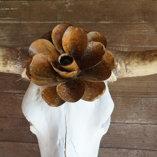 Toro Blanco Cow Skull