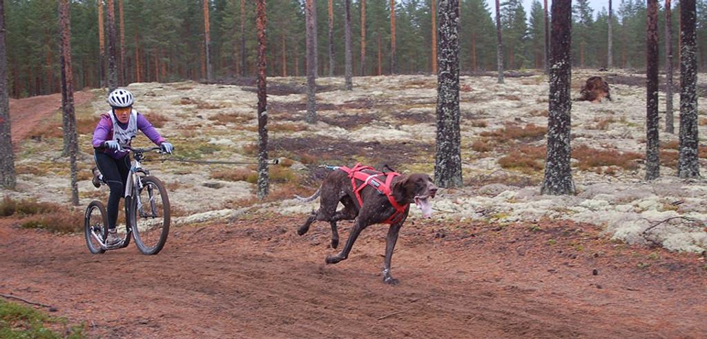 Campo Combi Dog Leash Adaptor