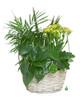 Plants in a Basket