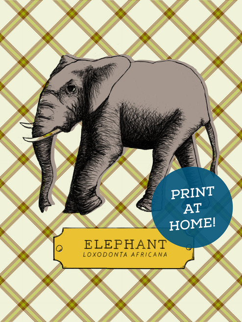 Illustrated Elephant Printable