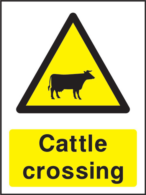 Cattle Crossing