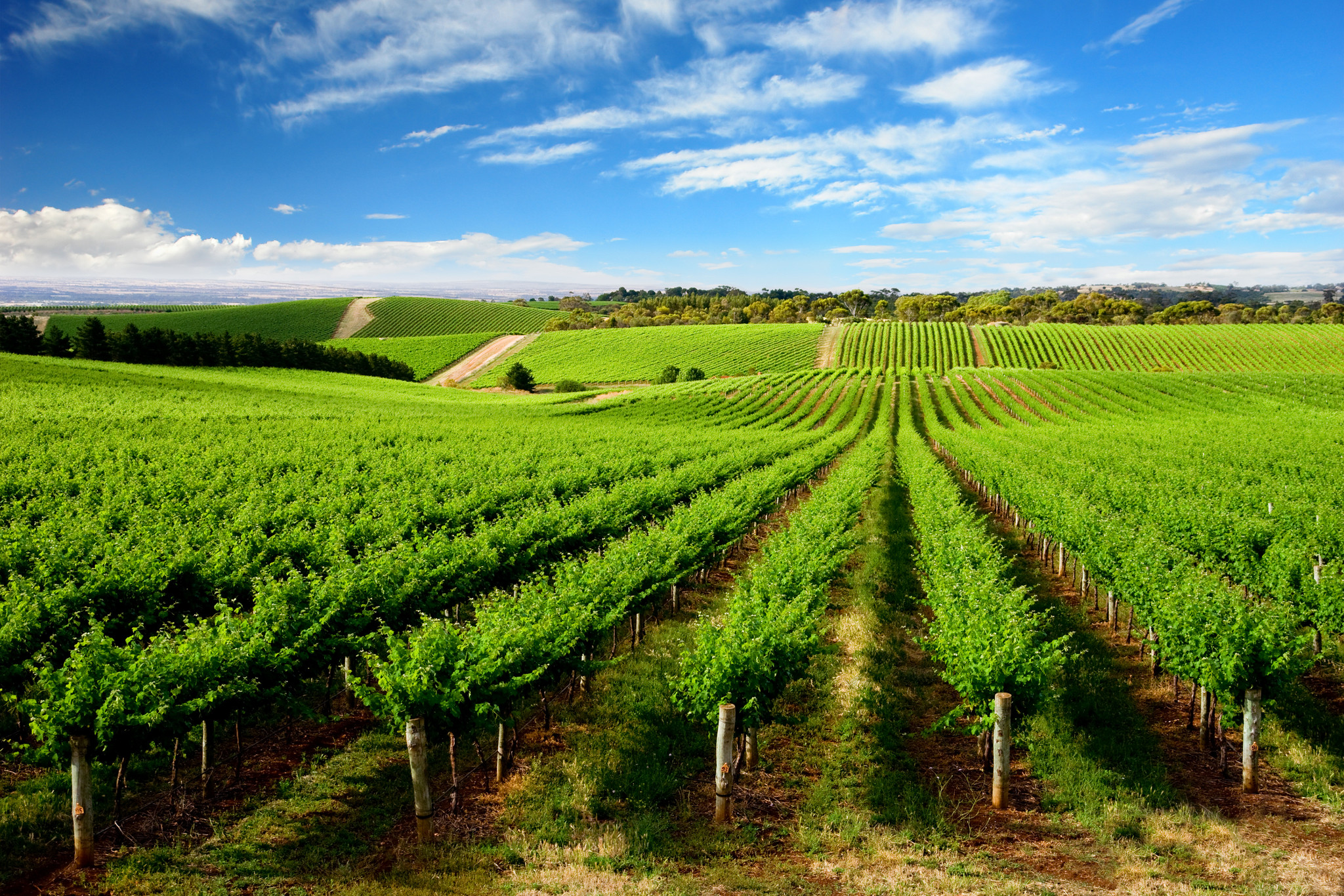 Wineries in Santa Barbara
