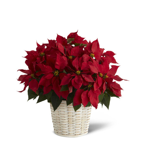 Red Poinsettia Basket (Large) Simi Valley Flower Delivery