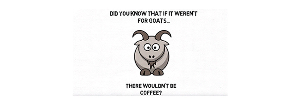 Without Goats There Wouldn't Be Coffee (VIDEO)