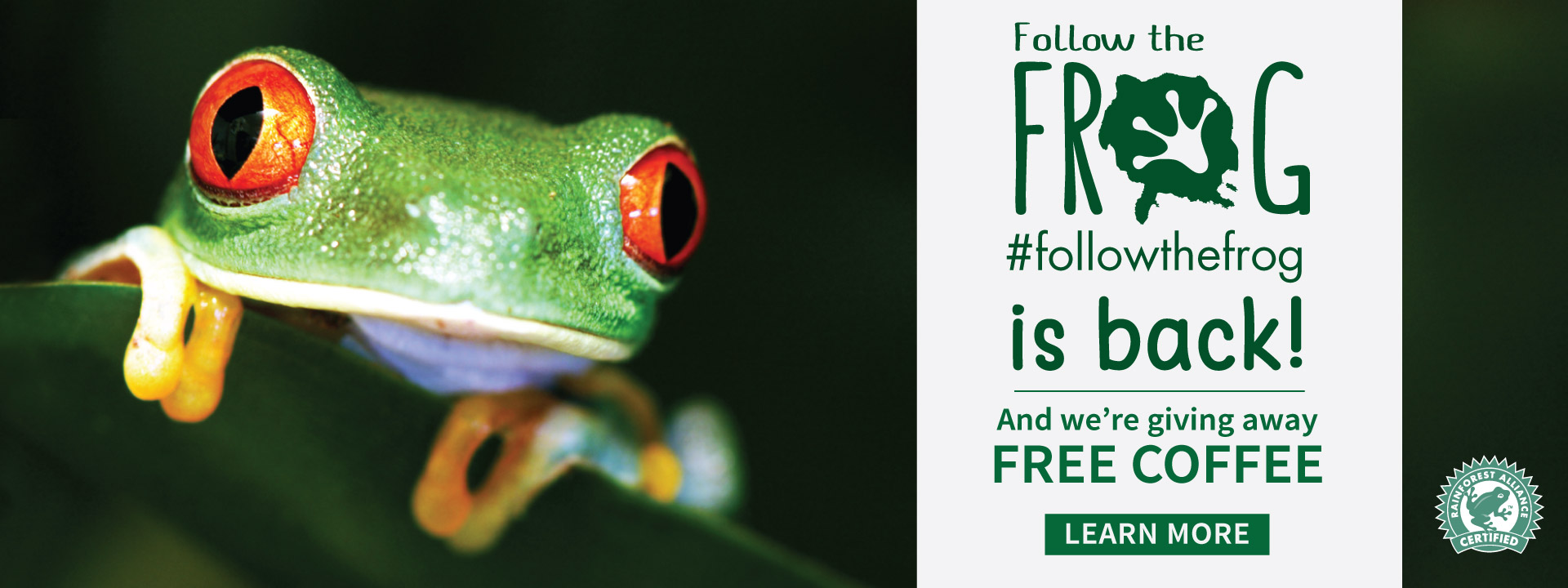 #followthefrog contest