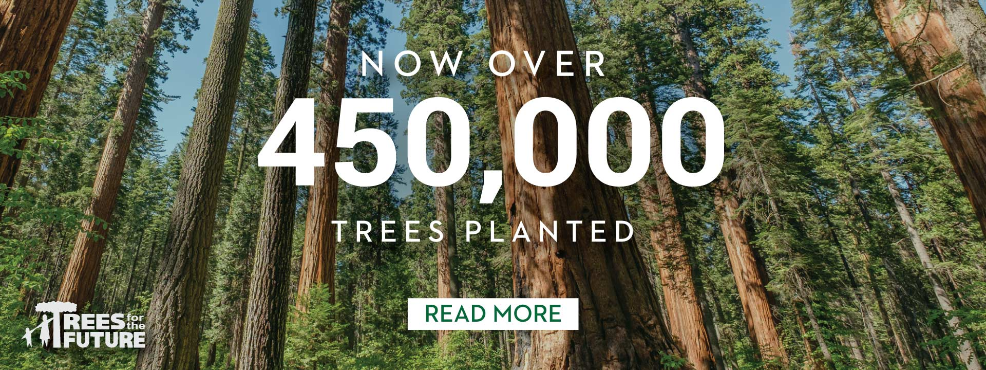 450,000 Trees Planted