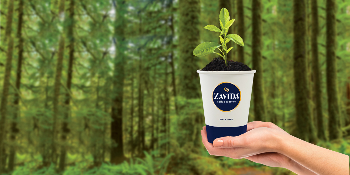 zavida-cafe-tree-planting.jpg