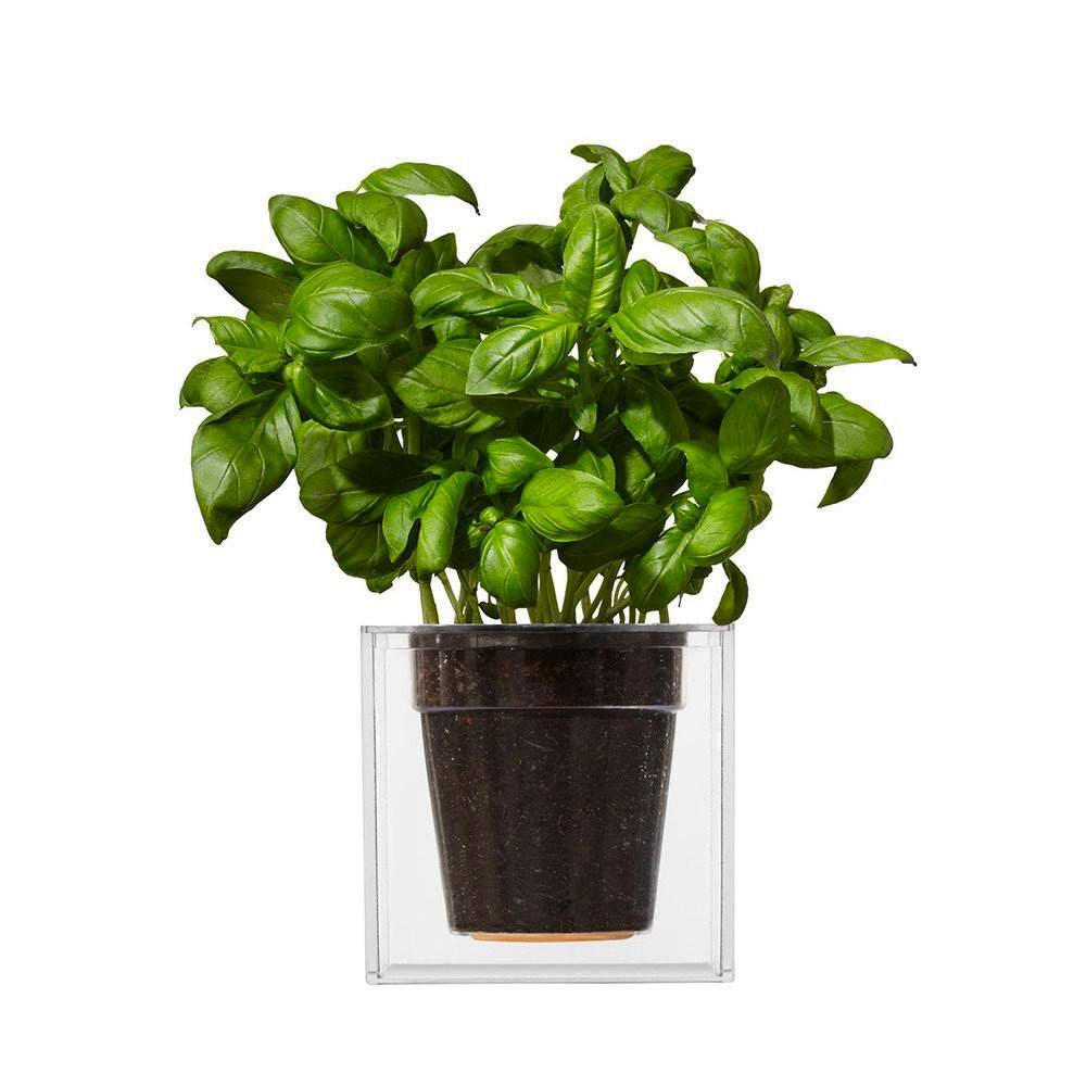 BOSKKE Clear Cube Planter | The Design Gift Shop