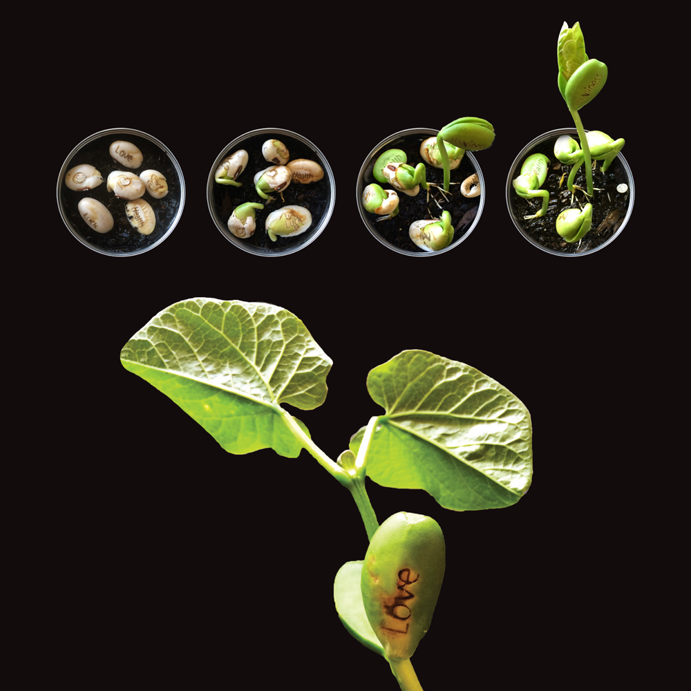 Magic Message Beans Growing | The Design Gift Shop