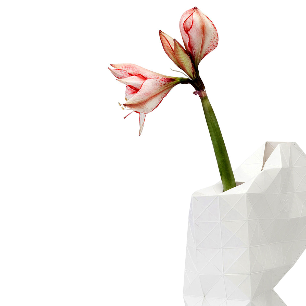 White Paper Vase Cover (detail) | The Design Gift Shop