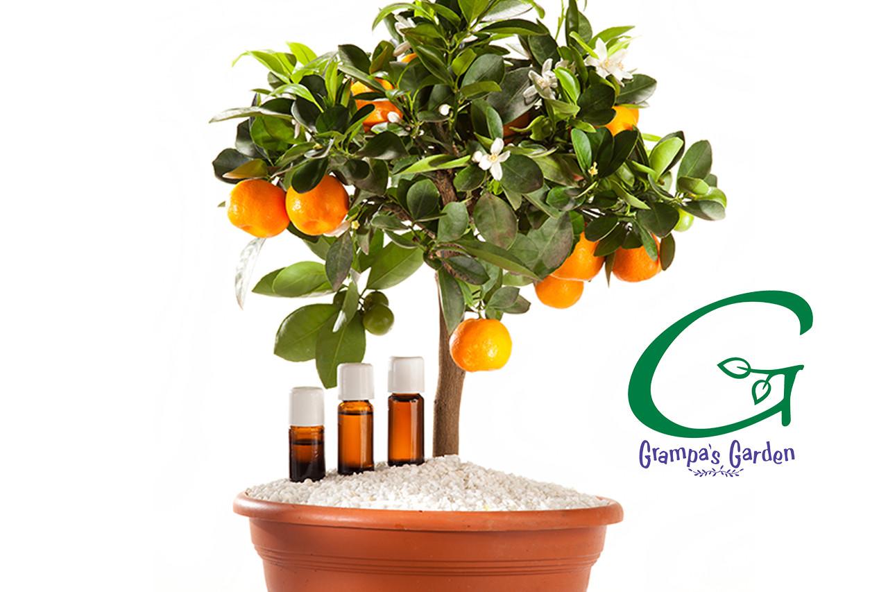 Petitgrain Pure Plant Essential Oil by Grampa's Garden