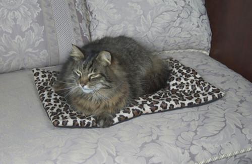 Cat Napper Mat