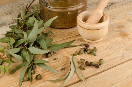 Eucalyptus - Eucalyptus globulus