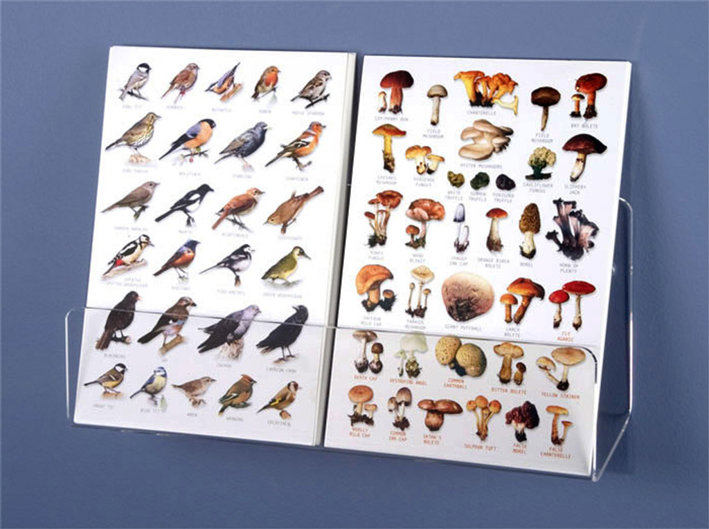"""Clear acrylic 12"""" wide card shelf for wall-mounting is perfect for displaying a group of individual cards."""