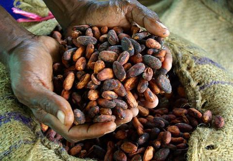 Why Fair Trade Chocolate?