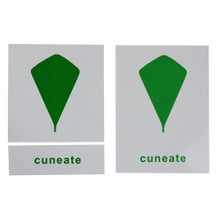 Leaf Shapes Nomenclature Cards