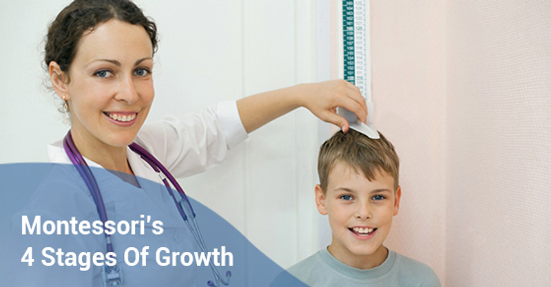 All About Montessori's 4 Stages Of Growth