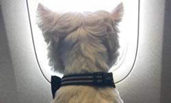 Airline Pet Travel