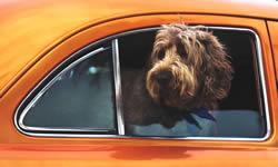 Auto Pet Travel