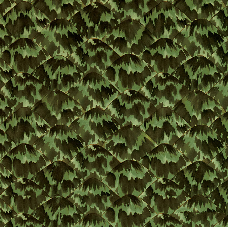 Tortoise Wallpaper in Amazon