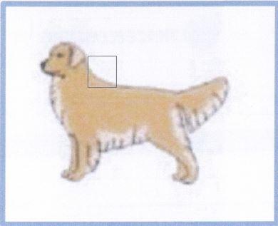 Where to sample hair on dog