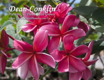 Dean Conklin Plumeria