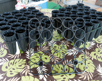 Rooting Tubes - 25 tubes - 1 Tray
