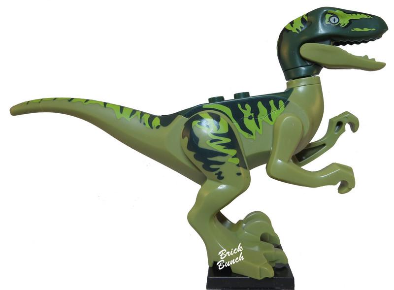 Raptor (Charlie)