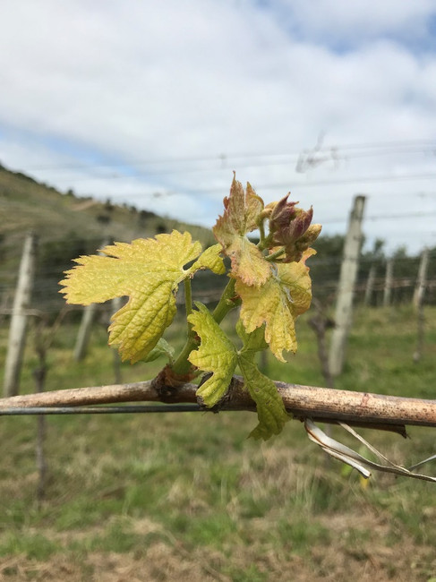 Spring into the Vineyard