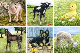 all-sides-farm.jpg