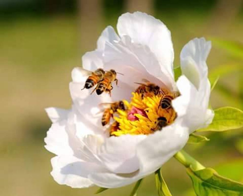 SICK BEES EAT HEALTHIER