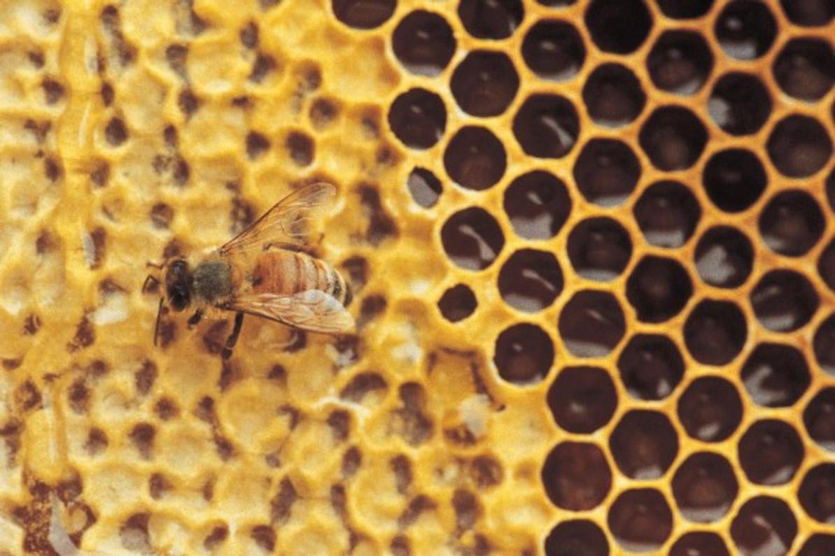9 natural health benefits of Bee Propolis