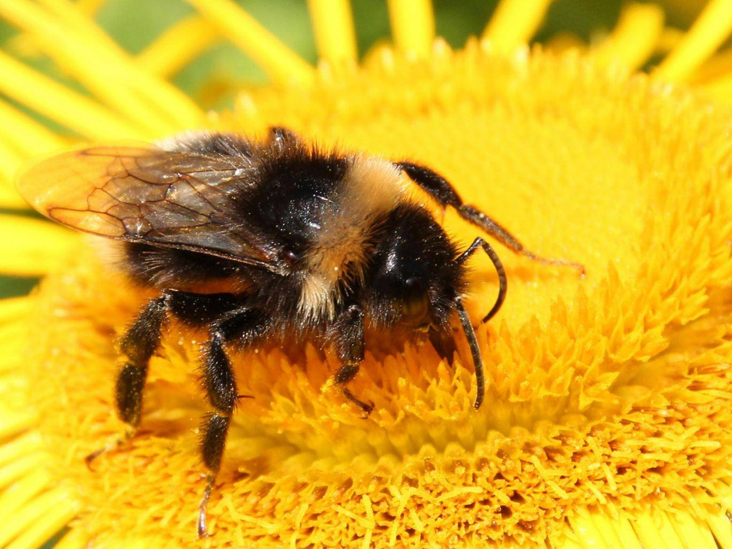 Robot bees vs real bees – why tiny drones can't compete with the real thing Collecting pollen takes a surprising amount of teamwork