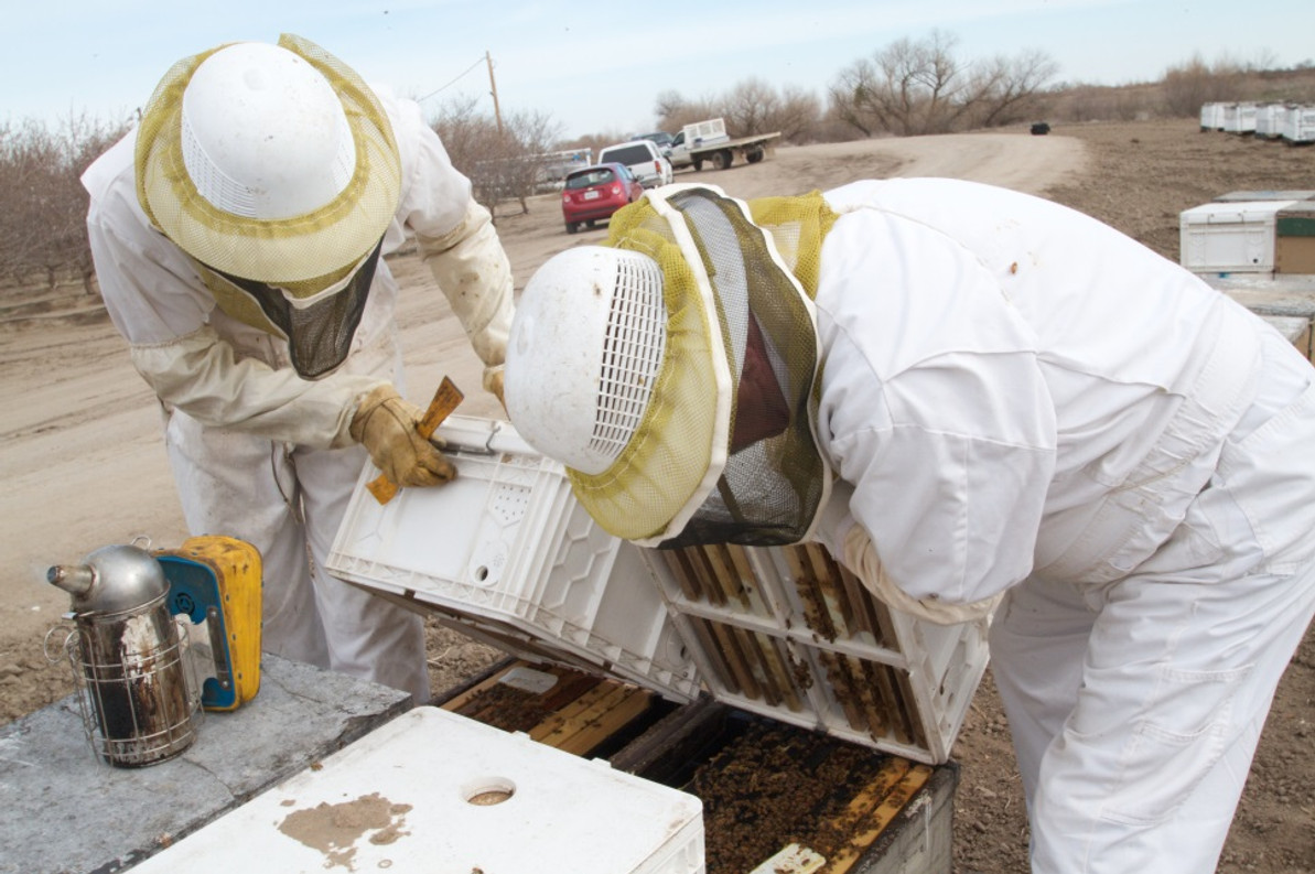 Honey bee (Apis mellifera) colony health and pathogen composition in migratory beekeeping operations involved in California almond pollination