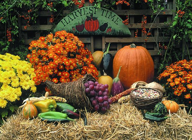 HT100 - Harvest Time