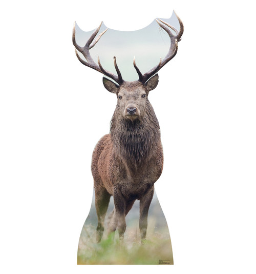 Life Size Elk Cardboard Standup Cardboard Cutout