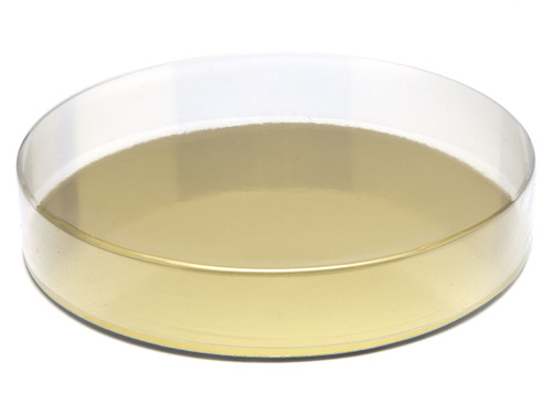 160mm Round Transparent Base and Lid - Clear | MeridianSP