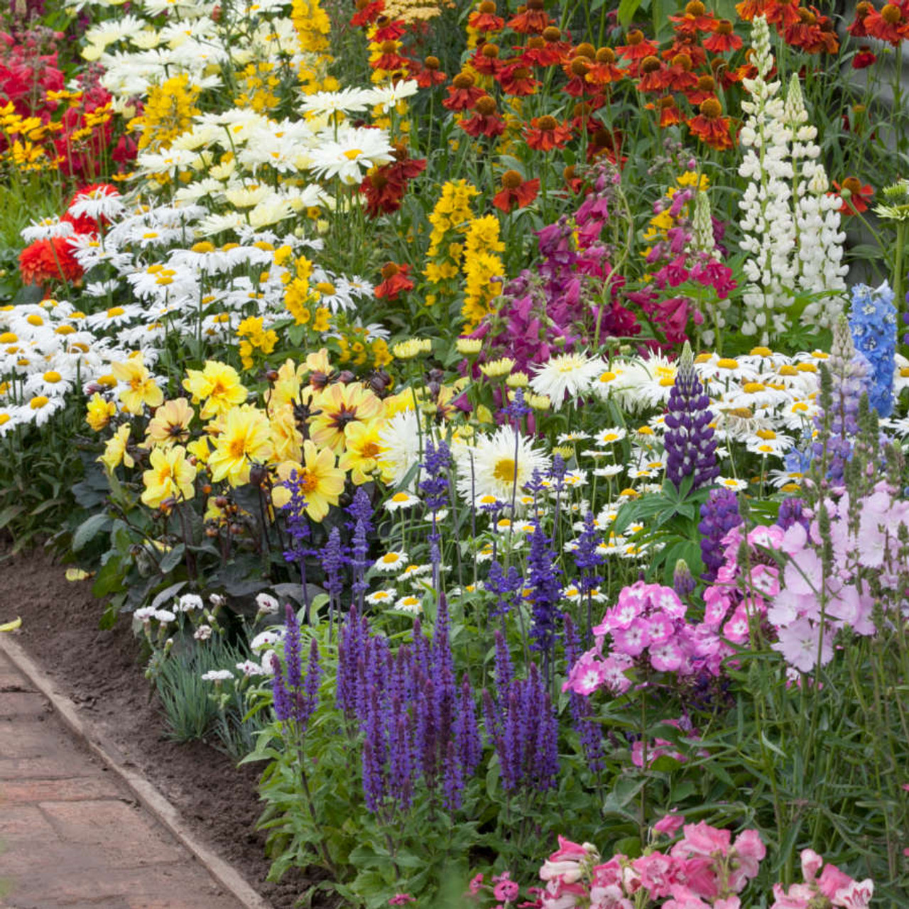 Spectacular Summer Flowering Perennials Collection Mr Middleton