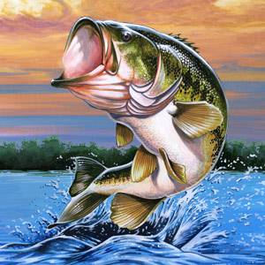 largemouth bass facts information and photos   american