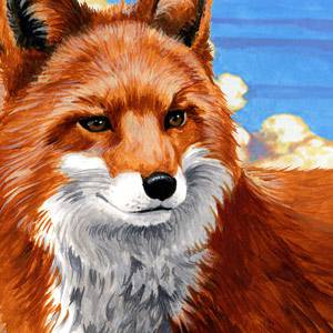 Red Fox Information Facts Habitat And Photos American