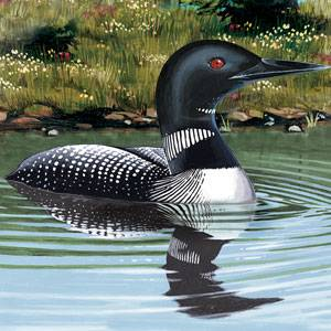 Common Loon Facts Information And Photos American